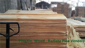 Natural Rotary Cut Veneer of Radiata Pine Wood and Birch Veneers