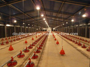 Steel Structure Poultry House with Roof and Wall Panels pictures & photos