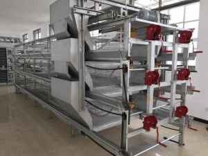 Automatic a Type of Pullet Cage pictures & photos