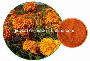 Hot Selling Marigold Root Extract Alpha-Terthienyl 0.1% pictures & photos