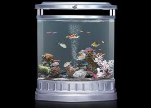 Cylindrical Decoration Aquarium, Office Fish Tank (1860*Diameter1000mm)