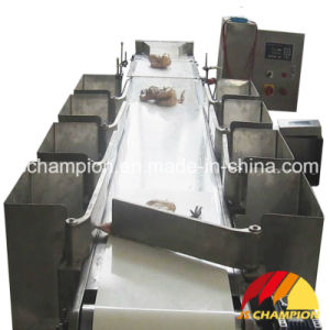 Poultry Slaughterhouse Using Automatic Poultry Bodies Weighing Grader pictures & photos