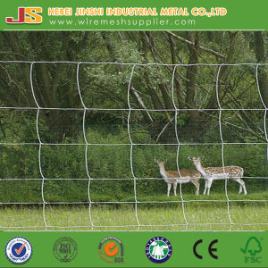 Hinge Joint Fence/Cattle Fence/Sheep Fence/Deer Fence/Animal Fence Factory pictures & photos