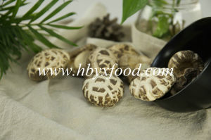 Dehydrated White Flower Mushroom/Dried Vegetable pictures & photos