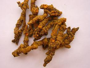 Hot Sale 100% Natural Coptis Root Extract pictures & photos