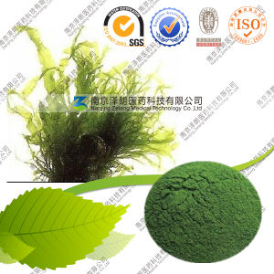GMP Certified Manufacturer 100% Pure Nutritional Spirulina Price pictures & photos