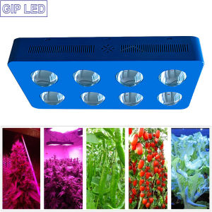China Market Ce RoHS Approved New COB LED Grow Lights pictures & photos