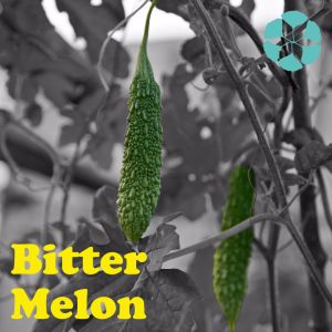 Bitter Melon Extract / Momordica Charantia Extract / Charantin pictures & photos