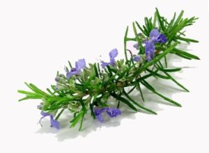 Rosemary Extract pictures & photos