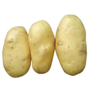 New Crop Fresh Potato (150g and up) pictures & photos