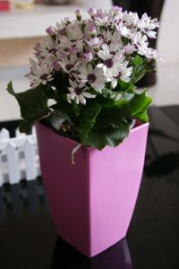 Special Colourfull Decorative Rectangle Flower Pot