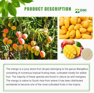 100% Natural Mango Leaf Extract Mangiferin 90% pictures & photos