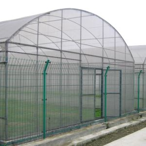 Low Cost Agriculture Single Span Film Greenhouse for Sale From China pictures & photos