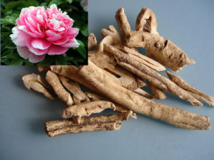 Factory Cortex Moutan/ Tree Peony Bark Extract Powder pictures & photos