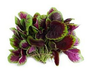 Amaranthus Mangostanus Extract/Red Spinach Extract Powder pictures & photos