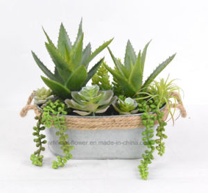 Succulent Potted Mixed Plant for Decoration of Home/Office etc with Iron Pots pictures & photos