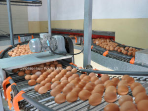Hot Sale Automatic Equipment in Poultry House with Prefab House Construction for Chicken pictures & photos