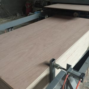 High Quality Bintangor Plywood for furniture pictures & photos