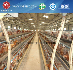 Best Selling Chicken Farm Cage /Paramid Chicken Cage/a Type Chicken Cage Layer pictures & photos