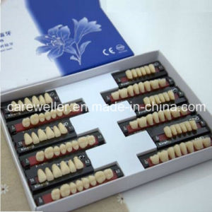 Three Layer Synthetic Resin Teeth pictures & photos