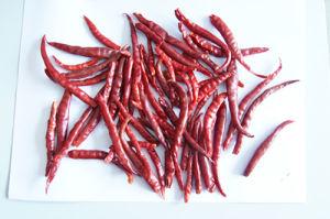 Yunnan Chilli