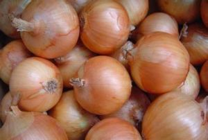 Golden Supplier About Yellow Onion (3-5cm) pictures & photos