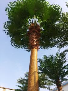 Artificial Plants and Flowers of Big Fan Palm 5m pictures & photos