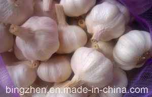 High Quality Chinese Fresh Hybridization Garlic From Jinxiang Origin pictures & photos
