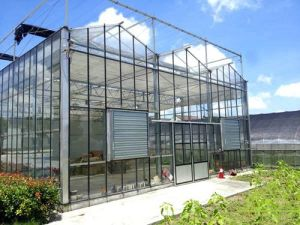 Multi-Span Gothic Film Greenhouse with Pep Drop-Proof