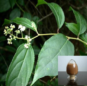 Sell High Purity Plant Extract Tripterygium Wilfordii Extract 38748-32-2 pictures & photos