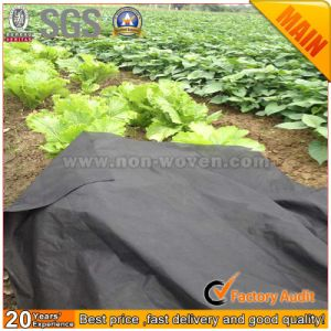 Wholesale 3% Anti-UV Biodegradable Agricultural Fabric pictures & photos