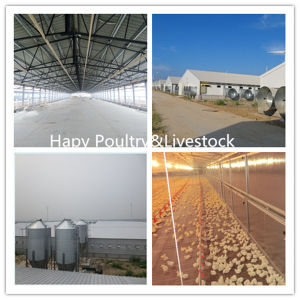 Prefabricated Poultry House/Chicken Farm with Full Set Poultry Equipment pictures & photos
