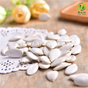 Chinese Best Snow White Pumpkin Seeds for Cook pictures & photos
