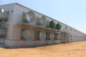 Economic Steel Material Chicken Farm with Equipments pictures & photos