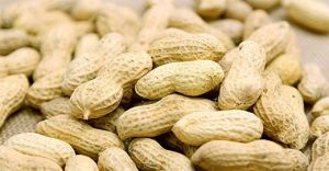 Export Good Quality Fresh Chinese Peanut Kernals pictures & photos