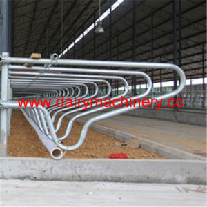 Steel Pipe Cow Free Stall pictures & photos
