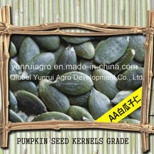 Chinese Pumpkin Kernels Without Shell