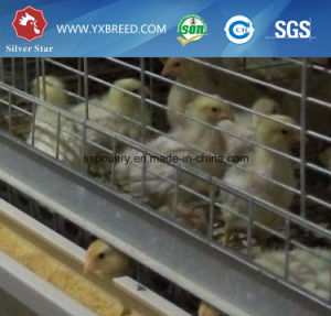 Complete Parts Farming Broiler Cage of H Type 4 Tiers (H-4L120) pictures & photos
