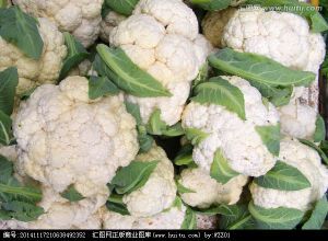 Chinese New Crop Frozen Cauliflower for Exporting pictures & photos
