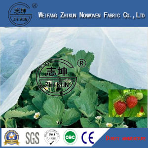 Spunbonded 100% PP and UV Agriculure Non Woven Fabric pictures & photos
