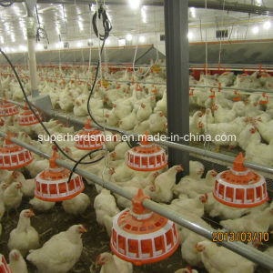 Automatic Poultry Farm Equipment for Breeder House pictures & photos