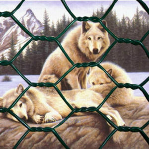 Hot Sale Hexagonal Wire Mesh for Raising Chicken and Rabbit pictures & photos