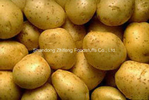 High Quality Potato for Exporting pictures & photos