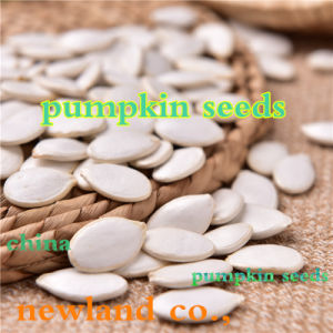 Top Quality Snow White Pumpkin Seeds to America pictures & photos