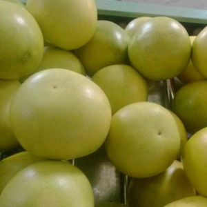 Exported Standard Quality of Fresh Honey Pomelo pictures & photos