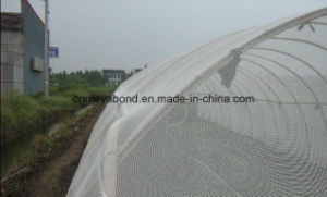 Anti Insect Net of 100% Polyester Mosquito Netting pictures & photos