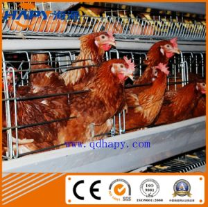 Cage Breeding for Broiler in Poultry House From Super Herdsman pictures & photos