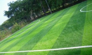 Bi-Color Comfortable Turf Lawn Artifical Football Grass pictures & photos
