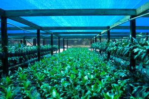 Shade Cloth / Greenhouse Shade