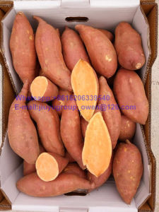 Health Food Top Quality New Crop Sweet Potato pictures & photos